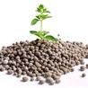 Plant phosphate nutrition