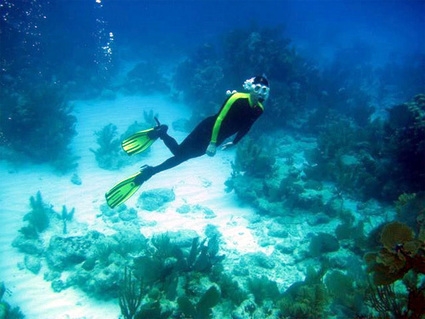 Wetsuit or dive skin? | Belize in Social Media | Scoop.it