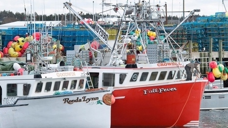 N.S. 'Dumping Day' docked by blustery forecasts in effort to make lobster hunt safer | Nova Scotia Fishing | Scoop.it
