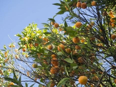 Mes bonnes adresses à Nice Vagabondes blog voyage | Cyril Bladier Fooding | Scoop.it