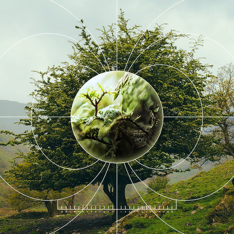 How Information Theory Could Hold the Key to Quantifying Nature | WIRED | Aggregate Intelligence | Scoop.it