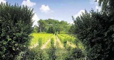 Omerta sur les pesticides dans le vignoble bordelais | Autour du vin | Scoop.it