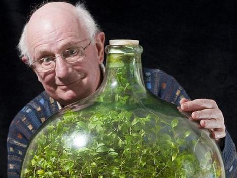 Enfermée depuis 53 ans, une plante a créé son propre écosystème pour survivre ! | Ce qui m'intéresse | Scoop.it