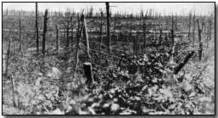 First World War.com - Battles - The Battle of the Somme, 1916 | Battle of the Somme | Scoop.it