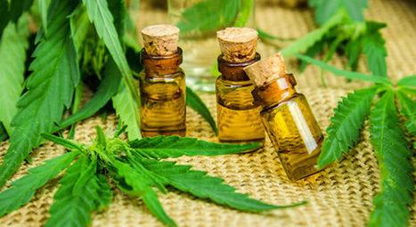 cannabis datation