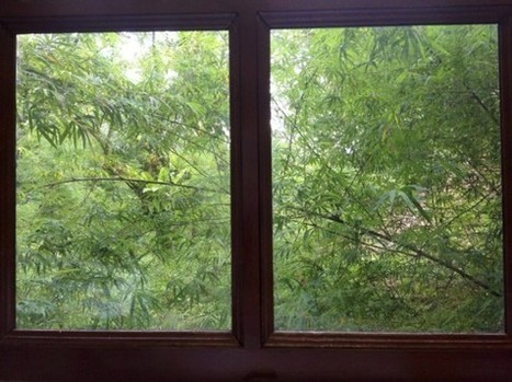 Windows with a Biodiversity View   Sustainable Cities Collective   S'emplir du monde...   Scoop.it