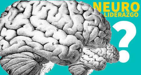 ¿Qué es el Neuroliderazgo? | Mindful Leadership & Intercultural Communication | Scoop.it