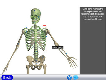 Visual Anatomy - An App for Anatomy Students | Edu-Recursos 2.0 | Scoop.it