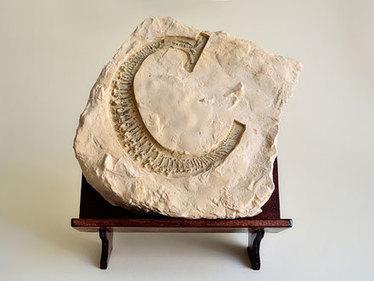 発掘されるタイポグラフィ「Evolution of Type, Exhibits 22-26」: DesignWorks | アート/デザイン | Scoop.it
