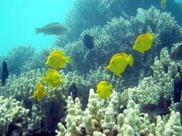 Study: Man-made ocean acidity threatens sea life   OUR OCEANS NEED US   Scoop.it