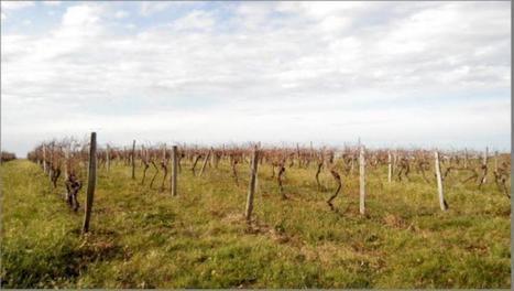 Connaissez-vous les vins gersois bio ? - LaDépêche.fr | Vins nature, Vin de plaisir | Scoop.it