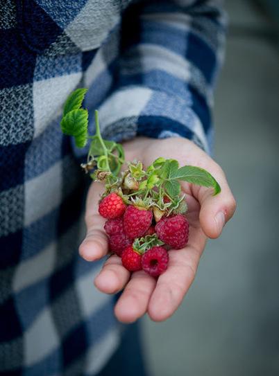Kỹ thuật trồng cây mâm sôi nhiều quả | tamdeptrai | Scoop.it