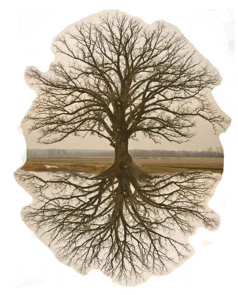 Introduction and additional resources on this topic ... | Neuroscience - Memory - Learning - Mindfulness - Motivation | Scoop.it
