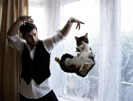 30 + Perfectly Timed Funny Cats | inspiration photos | picturescollections | Scoop.it
