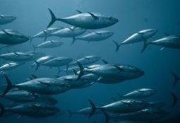 Spain creates second-largest national marine park in Mediterranean