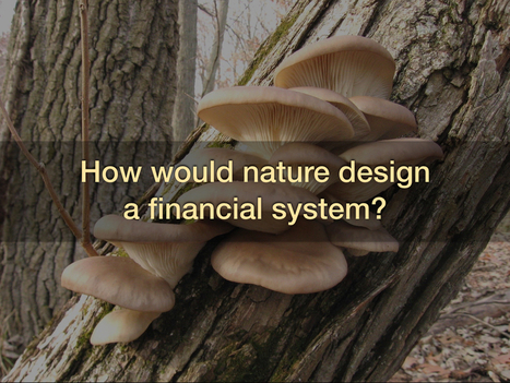 How might nature design a financial system? | Business as an Agent of World Benefit | Scoop.it
