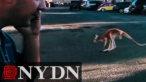 Buster the Kangaroo stages NYC Street Improv - Street I Am   busking   Scoop.it
