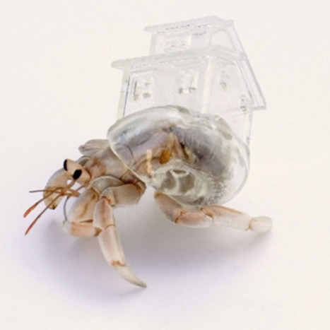 Artist designs intricate 3D-printed shells for hermit crabs | D_sign | Scoop.it