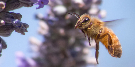 How Your Bee-Friendly Garden May Actually Be Killing Bees | Science | 21st Century Innovative Technologies and Developments as also discoveries, curiosity ( insolite)... | Scoop.it