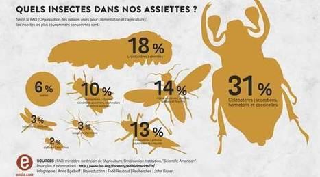 Découvrez le goût des insectes comestibles - Agro Media   Actualité de l'Industrie Agroalimentaire   agro-media.fr   Scoop.it
