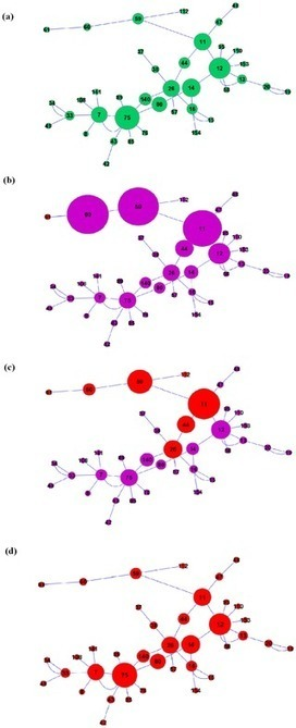 Percolation Centrality: Quantifying Graph-Theoretic Impact of Nodes during Percolation in Networks | Information, Complexity, Computation | Scoop.it