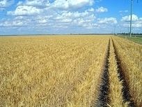 Agricultural Investments Present Opportunity - Article by Major American Business Magazine Forbes   agriculture investments   Scoop.it