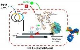 ADC' in Top Selling Monoclonal Antibodies | Scoop it