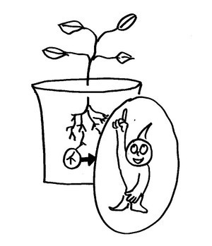 How Do Plants Know Which Way Is Up And Which Way Is Down? : NPR | this curious life | Scoop.it
