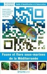 Découvrir Autrement, faune et flore ss marine méditérranée « TURTLE PROD | Pralines | Scoop.it