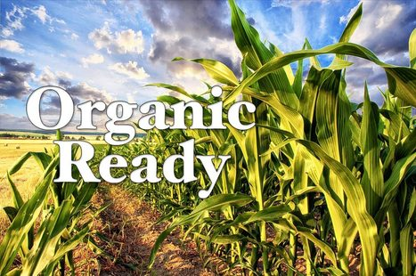 Organic Ready: Protecting Organic Corn from GMO Contamination - Organic Connections | Searching for Safe Foods | Scoop.it