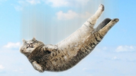 Why Cats Can Survive Falls that Would Kill any Other Animal? | Weird Science | Scoop.it