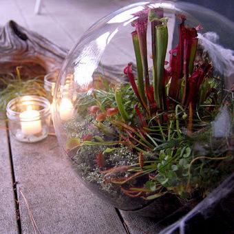 DIY : un terrarium spécial Halloween !!! | DIY DIY | Scoop.it