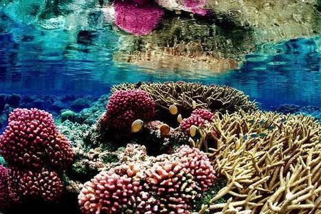 Los grandes arrecifes de coral protegieron la d...