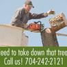 Tree Removal Monroe