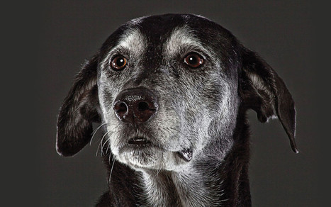 Beautiful Old Dogs: Touching Portraits of Our Senior Best Friends - PARADE | cats & dogs! | Scoop.it