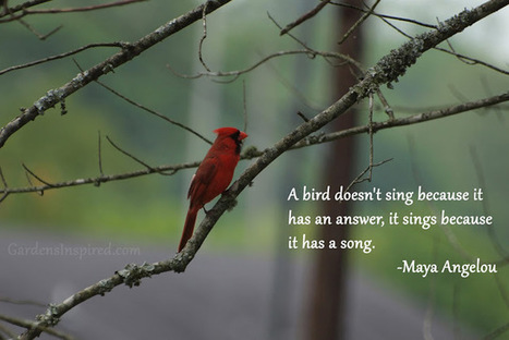 Quote by Maya Angelou | The Muse | Scoop.it