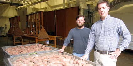 Championing the Sweet Potato :: North Carolina State University Bulletin | Research from the NC Agricultural Research Service | Scoop.it