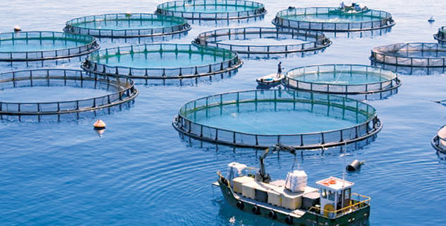 MAROC : Aquaculture : Agadir Haliopôle Cluster accompagne les start-up innovantes