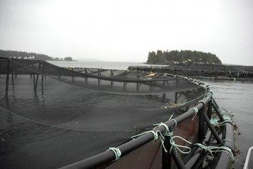 [Canada] Usage illégal de pesticides: un géant du saumon mis à l'amende | Toxique, soyons vigilant ! | Scoop.it