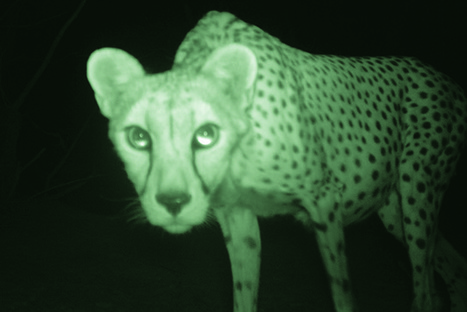 Why Secret Wildlife Cameras Might Be a Poacher's Worst Nightmare | Wildlife | Scoop.it
