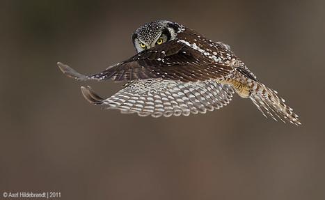 Owl's Glance | Kuwaitiful | Amazing Rare Photographs | Scoop.it