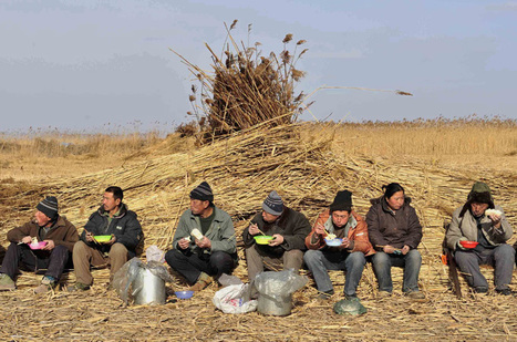 China's farming history misapplied in Africa | AP Human Geography Education | Scoop.it