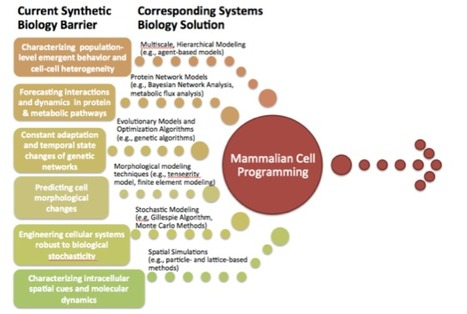 Systems Approaches for Synthetic Biology: A Pathway Toward Mammalian Design | SynBioFromLeukipposInstitute | Scoop.it