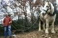 Quel avenir pour la petite agriculture ? - France Info   Vins bio   Scoop.it