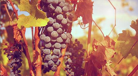 Etude sur la commercialisation du vin en vrac et l'adaptation des rendements viticoles aux stratégies des entreprises. « Cabinet Zebic | Le commerce du vin, entre mythe et réalité | Scoop.it