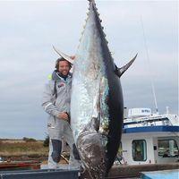 Angler lands 1000-pound bluefin tuna off Nova Scotia - Pete Thomas Outdoor | Nova Scotia Fishing | Scoop.it