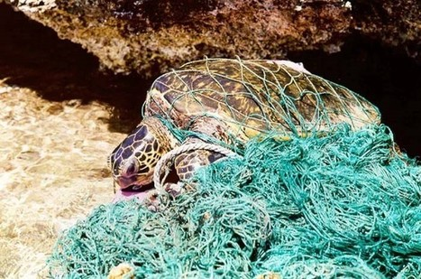 Remove 'Ghost Fishing' Nets that Threaten Marine Life | Seahorse Project | Scoop.it