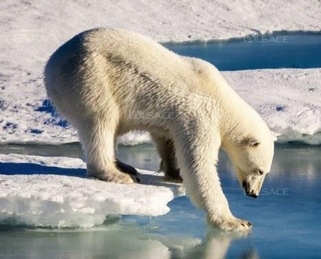 Les records de chaleur encore battus | Toxique, soyons vigilant ! | Scoop.it