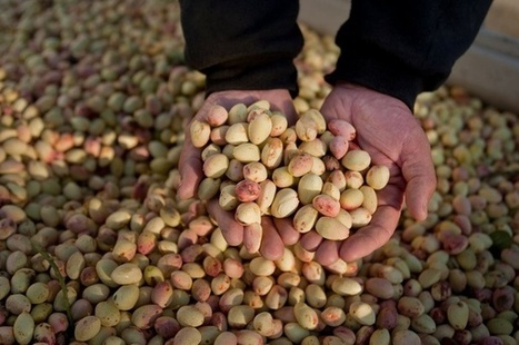 Should the U.S. Be Harvesting More Energy From Nuts? | Arrival Cities | Scoop.it