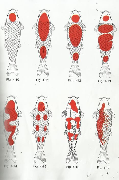different types of kohaku - Koi and Goldfish breeding tips   Koi keeper   Scoop.it